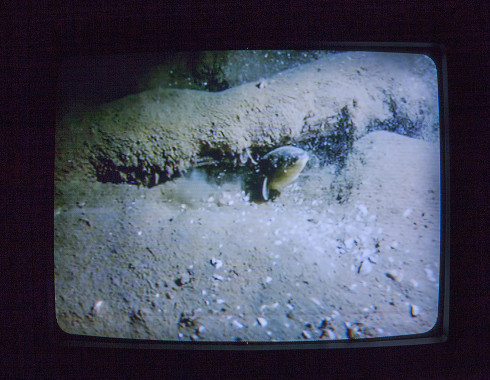 A photo of an analog television. The television is displaying an image of an eel swimming along the floor of a dark body of water. The fish is illuminated by a flashlight, which serves as the only source of light in the image and the photo as a whole.